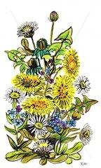 Fruehlingswiesenblumen