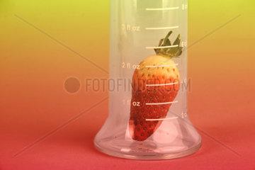 Erdbeere im Laborglas