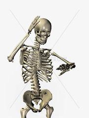 Illustration eines Skelettes
