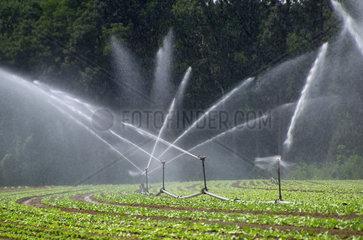 Bewasserungsanlage in der Landwirtschaft