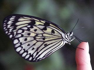 Schmetterling auf einem Finger