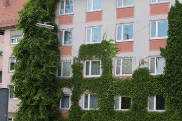 Wohnhaus mit Efeubepflanzung