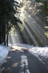 Lichstrahlen im Winterwald