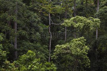 High Canopy Walkway  Borneo