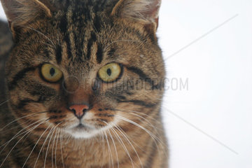 Katzenportraet