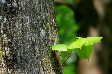 trunk with a green leaf