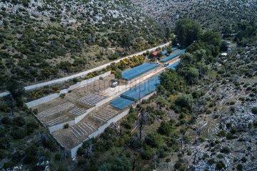 GREECE-PARNITHA'S MOUNTAIN NATIONAL PARK-WWF HELLAS-REFORESTATION