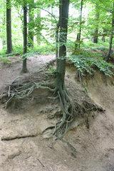 unterspuelter Baum