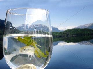 Fisch im Wasserglas