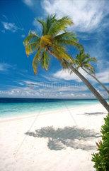 Palmenstrand Malediven