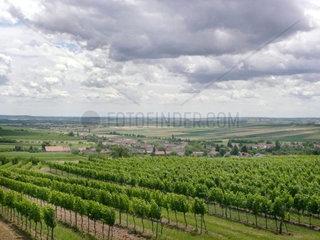 Blick ins Weinnviertel (Retzbach)