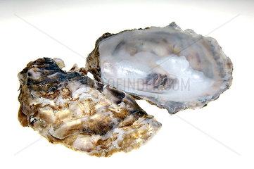 leere Austernschalen