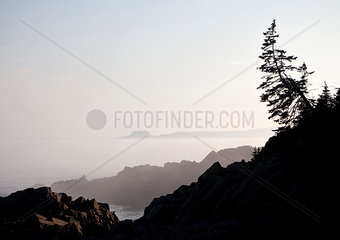 A tree is silhouetted against the sky along Maine's rugged coast.