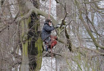 Baumpflege am Kletterseil