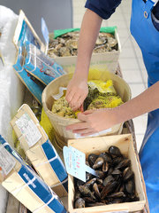 Fresh mussels at market