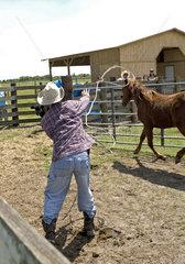 Letzte Cowboys USA