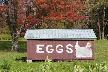 Henhouse advertising eggs