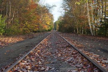 Railroad tracks through woods in autumn