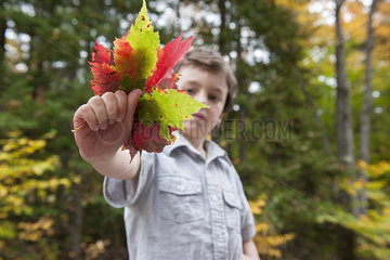 Boy holding out handful of colorful autumn leaves