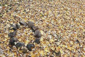 Abandoned campfire pit covered in autumn leaves