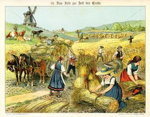 Landarbeiter bei der Ernte  1885