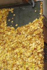 gefuellte Dachrinne im Herbst