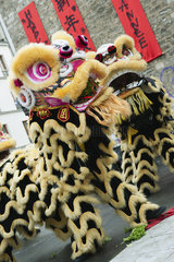 Lion dance in celebration of Chinese new year