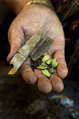 Hand holding cinnamon quills  cardamoms and cloves