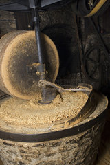 Milling machine grinding walnuts