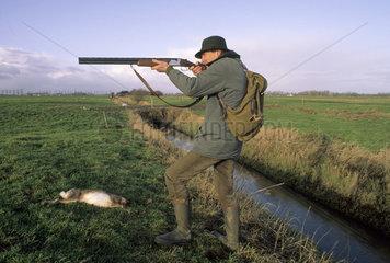 Jaeger bei Treibjagd mit Jagdhunden und erlegten Hasen