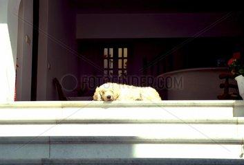 Hund liegt Hauseingang