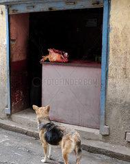 Sehnsuechtiger Blick auf die Fleischkeule