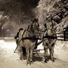Europe  Poland  Malopolska province  Stare Zukowice area  Agritouristical farm Furioso  sleigh ride with horses