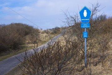 Weg durch die Duenenlandschaft  Insel Borkum  Nationalpark Niedersaechsisches Wattenmeer  UNESCO-Weltnaturerbe  Ostfriesland  Niedersachsen  Deutschland  Europa