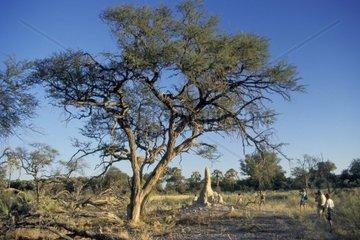 botswana  okawango delta