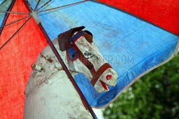 Pferd mit Schirm