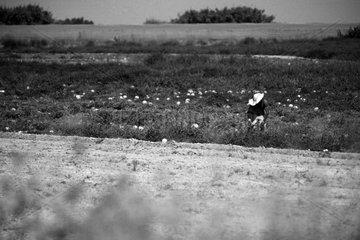 spanischer Feldarbeiter
