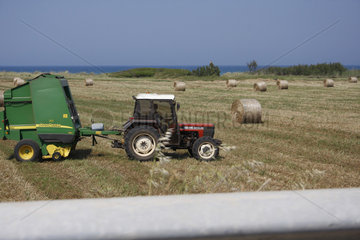 Landwirtschaft in Apulien