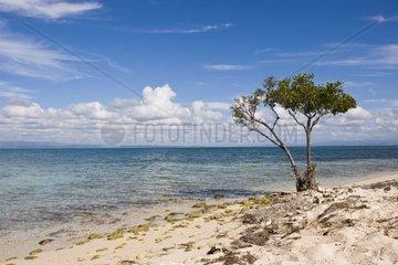 Cuba  Ancon Bay  beach