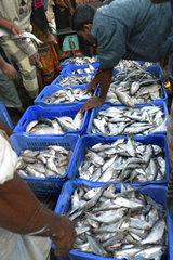 Fish market  Chittagong  Bangladesh