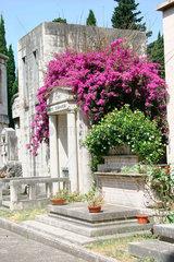 Bouganville zwischen den Graben der cimitero Verano
