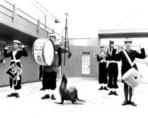 Musikgruppe mit Seeloewe
