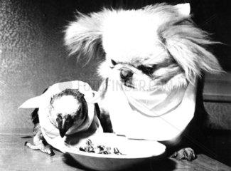 Hund + Vogel fressen aus Teller
