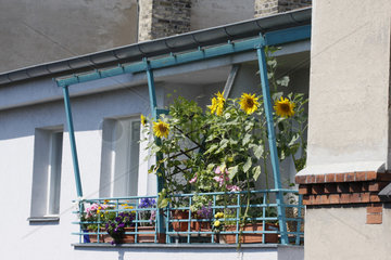 Balkon mit Sonnenblumen