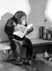 Schimpanse liesst
