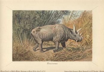 Dinoceras