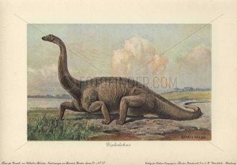 Diplodokus or Diplodocus longus