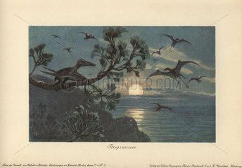 Rhamphorhynchus or Flugsaurier