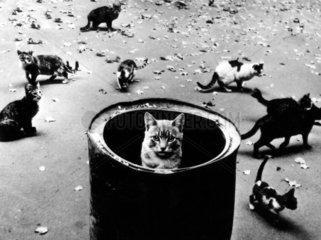 Katze schaut aus der Tonne