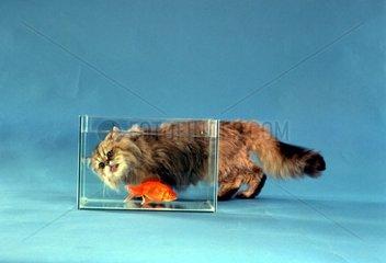 Katze und Goldfisch